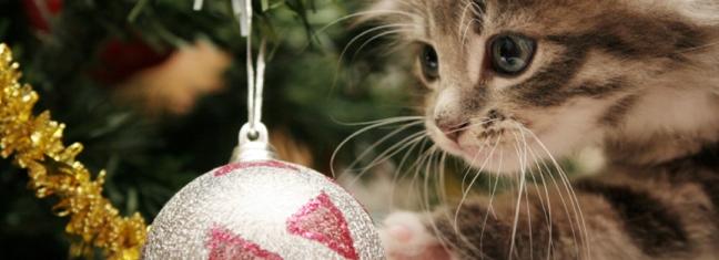 kitten_tree