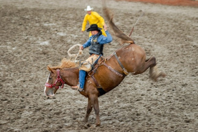 rodeo_weanimals_2