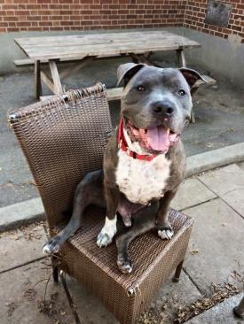 Enzo-sur-une-chaise
