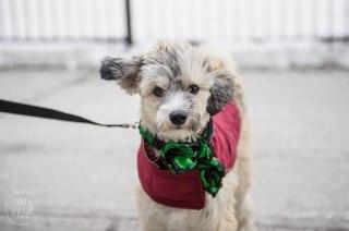 SPCA-St-Patrick-parade-6079