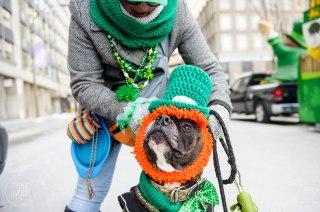 SPCA-St-Patrick-parade-6099