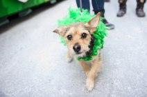 SPCA-St-Patrick-parade-6200