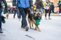 SPCA-St-Patrick-parade-6261