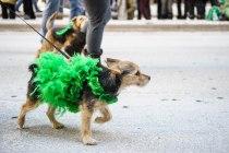 SPCA-St-Patrick-parade-6276