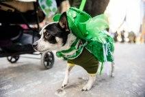 SPCA-St-Patrick-parade-6522