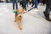 SPCA-St-Patrick-parade-6526