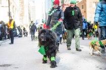 SPCA-St-Patrick-parade-6618